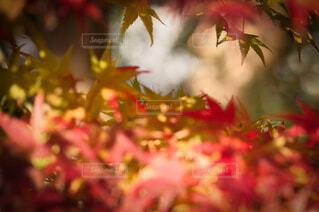 秋の隙間の写真・画像素材[4102085]