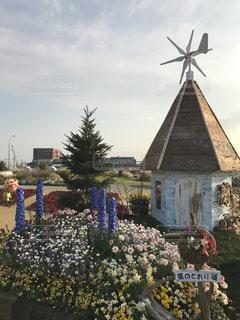 #横浜  #花  #花壇の写真・画像素材[413427]
