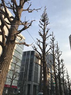 #横浜  #冬の街路樹の写真・画像素材[413433]