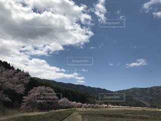 #桜 #青空 #山里の写真・画像素材[449796]