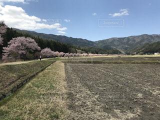 #桜 #青空 #山里の写真・画像素材[449797]