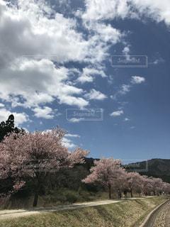 #桜 #青空 #山里の写真・画像素材[449799]