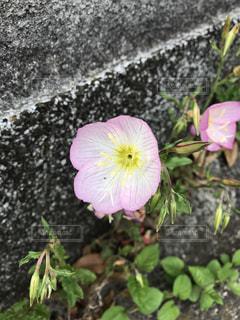 #花 #アップ  #春の写真・画像素材[461215]
