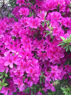 #花 #アップ  #春の写真・画像素材[474492]