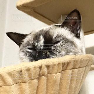 バスケットに座って猫の写真・画像素材[818118]
