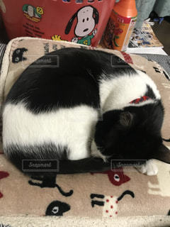 白い面の上に横たわる猫の写真・画像素材[1002057]
