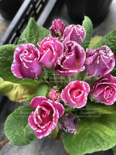 近くの花のアップの写真・画像素材[1002059]