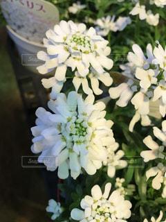 近くの花のアップの写真・画像素材[1002061]