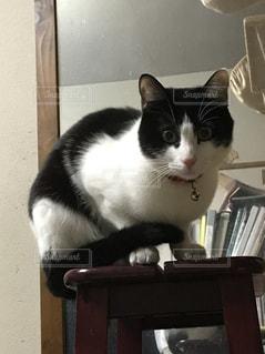 テーブルに座っている黒と白の猫の写真・画像素材[1002062]