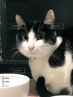 白い面の上に座って猫の写真・画像素材[1002065]
