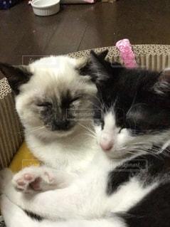 白い面の上に横たわる猫の写真・画像素材[1002070]