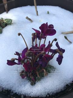 雪に覆われたケーキの写真・画像素材[1002072]