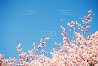 花の写真・画像素材[413423]