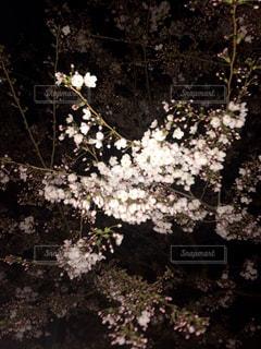 春 - No.415856