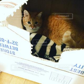 猫 - No.413586