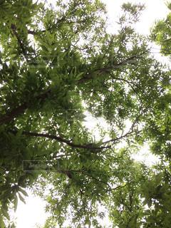 緑の写真・画像素材[514986]