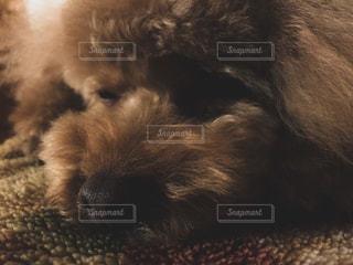 犬 - No.413813