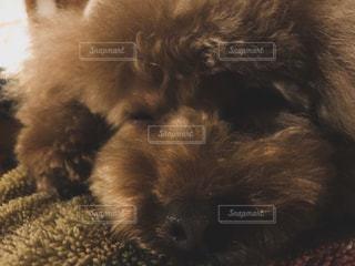 犬 - No.413814