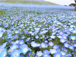 春の写真・画像素材[413772]