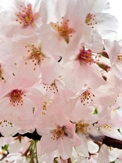 春 - No.420164