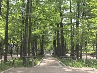 公園の写真・画像素材[482052]