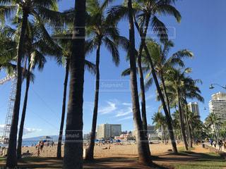 ハワイ - No.414965
