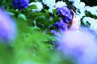紫陽花との写真・画像素材[2271088]
