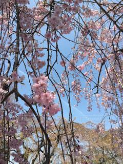 春 - No.414513