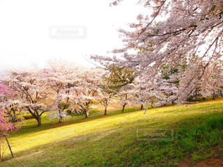 春の写真・画像素材[414562]