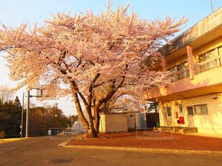 春の写真・画像素材[414564]