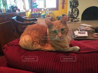 猫の写真・画像素材[414419]