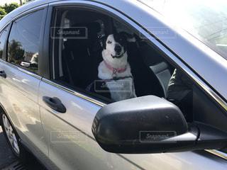 犬の写真・画像素材[544103]