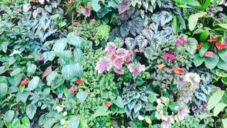 近くのフラワー ガーデンの写真・画像素材[1462739]