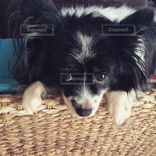 犬 - No.11146