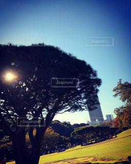 近くの木のアップの写真・画像素材[882268]