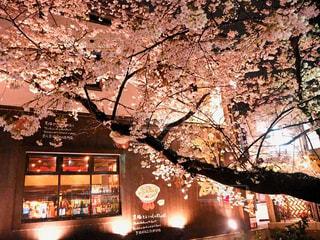桜 - No.428529