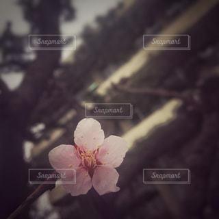 花の写真・画像素材[418690]