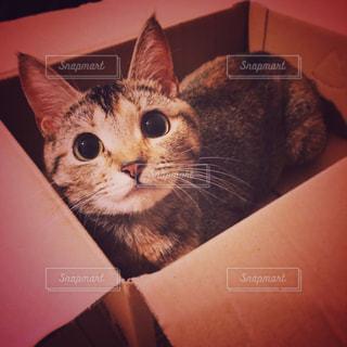 猫の写真・画像素材[418696]