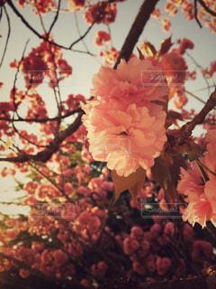 春の写真・画像素材[418761]