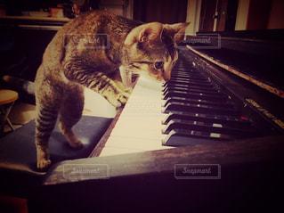 猫の写真・画像素材[419009]