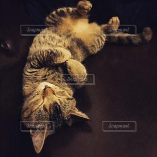 猫の写真・画像素材[432157]