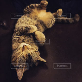 猫 - No.432157
