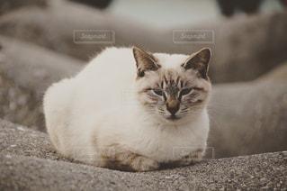 猫の写真・画像素材[415473]