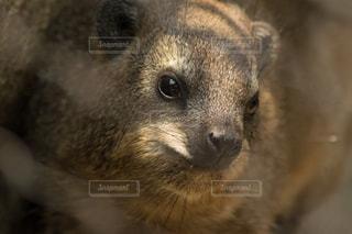 動物の写真・画像素材[415476]