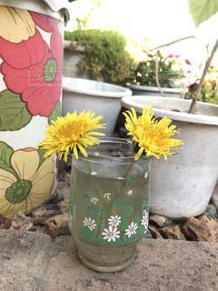花の写真・画像素材[455814]