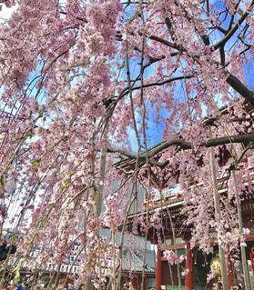 花の写真・画像素材[439466]