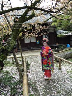 京都の写真・画像素材[420251]