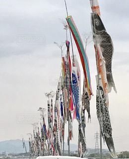 鯉のぼりの写真・画像素材[440656]