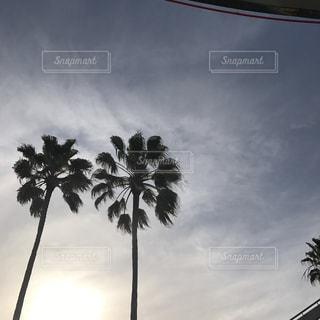 観光地の写真・画像素材[466509]