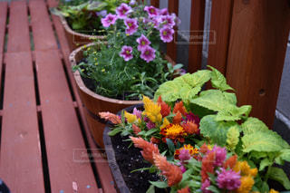 花の写真・画像素材[484015]